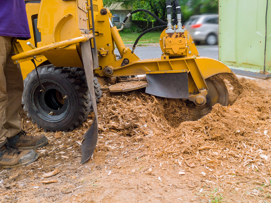 Recreate Your Landscape With Stump Removal Services